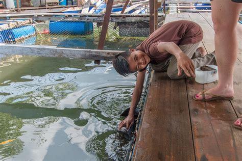 mangrove tour langkawi stingray attack
