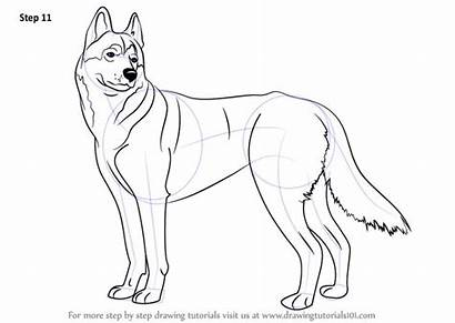 Husky Draw Step Drawing Drawingtutorials101 Dog Drawings