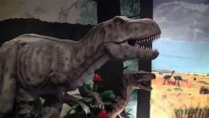 2014 National Dinosaur Museum - Tyrannosaurus Rex