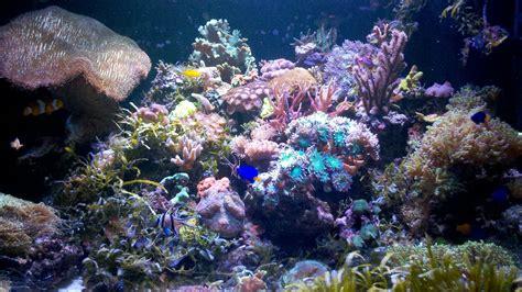 aquarium r 233 cifal 360 litres