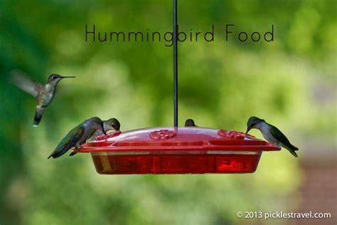 humming bird food hummingbird food