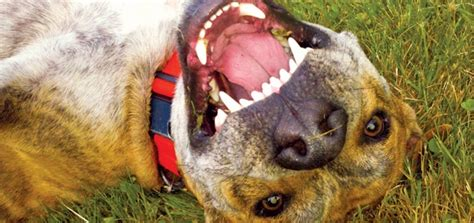 reasons     dogs teeth cleaned modern