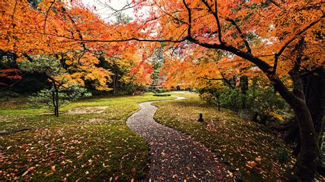 wallpaper autumn leaves yoshikien garden japan