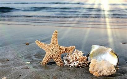 Sea Seashells Mar Wallpapers Fondos Pantalla Starfish