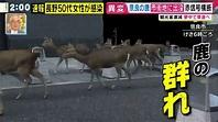 泰国大象挨饿、韩国狮子暴瘦:疫情下,全世界的动物园都在渡劫_百科TA说