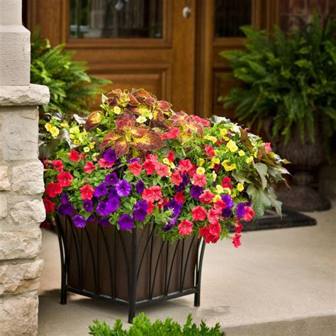 protect plants   late spring frost   tips hgtv