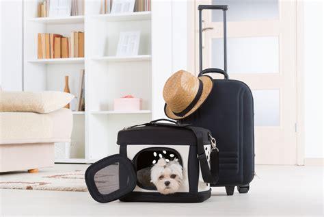 cani in cabina aereo consigli e informazioni per volare con il vostro