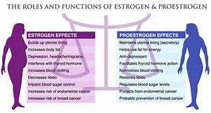 Image result for hormones and balance in women