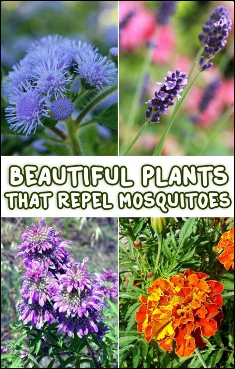 plants that mosquitoes 77 best images about garden decor on pinterest gardens planters and backyards