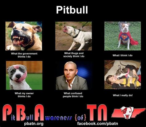 Funny Pitbull Memes - 17 best images about pitbull love