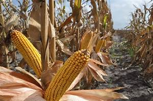 Can genetic engineering help crops adapt to a warmer world ...