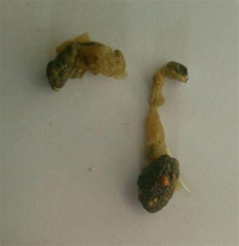 urin und koettelkunde