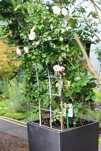 Tulpenzwiebeln Im Topf Pflanzen : rosen im topf t pfe pfannen produkte von sia f r ein sch ~ Lizthompson.info Haus und Dekorationen