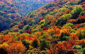 Fall Color Along The Highland Scenic Highway Photograph by ...