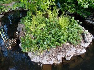 Native, Plants, U00ab, Backyard, Habitats