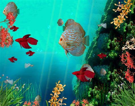 Animated Reef Wallpaper - coral reef aquarium 3d animated wallpaper http www