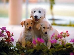 Cute Dog Wallpapers Wallpaper | wallpapers | Pinterest ...