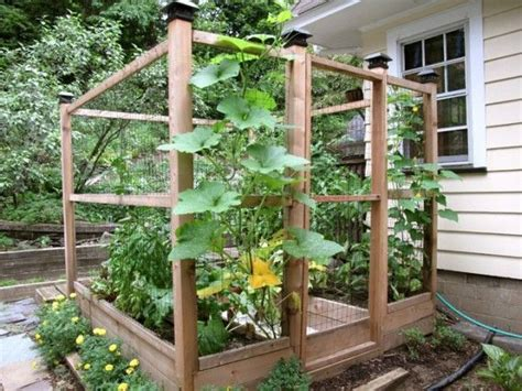 Enclosed Raised Vegetable Garden