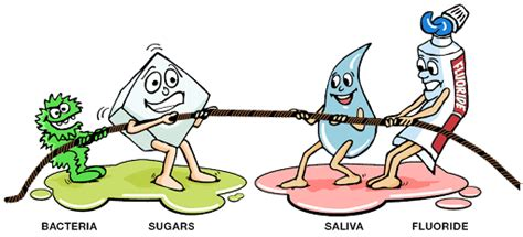 the tooth decay process how to reverse it and avoid a cavity national institute of dental and