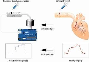 26 Based On The Diagram Oxygen Flows Through The