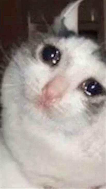 Crying Cat Meme Wallpapers Hearts Stockalike Tantares