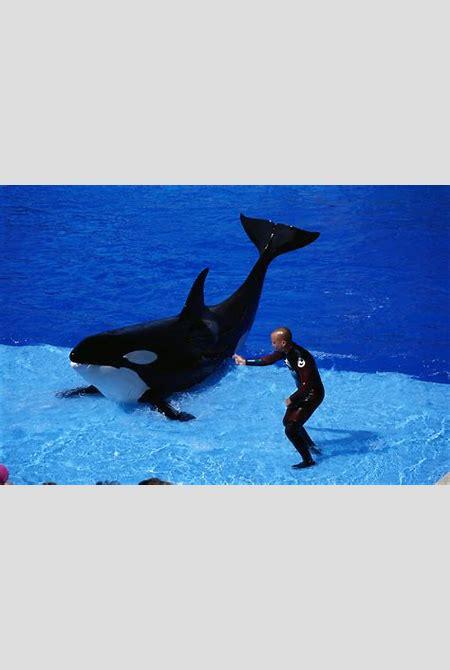 Tiburones y otros Reyes del Oceano en HD Primera Parte:Hot Bollywood and Hollywood Actress