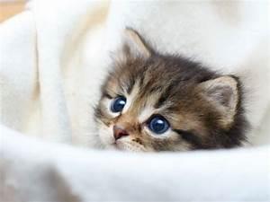 Weißer Wurm Katze : katzenbabys tapsige samtpfoten seite 1 tapsy pinterest katzenbabys katzen und s e tiere ~ Markanthonyermac.com Haus und Dekorationen