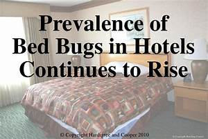 Hospitality law conference 2010 dont let bed bugs bite for Bed bug lawyer