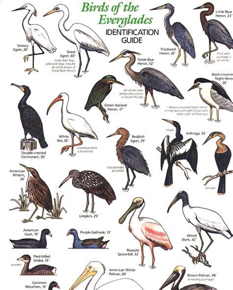 florida bird species identification driverlayer search