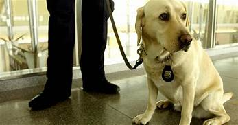 The TSA Wants You to Adopt Unwanted Bomb-Sniffing Puppies (Seriously)…