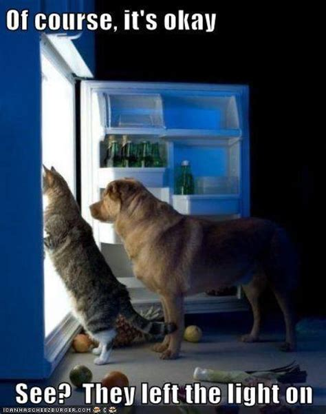 Dog And Cat Memes - of course its ok dog n cat meme