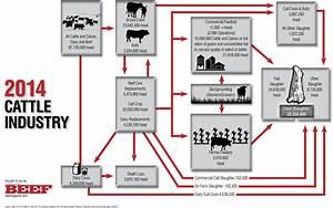 Cattle Industry Flow Chart 2014