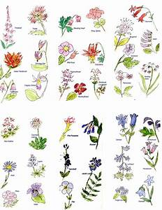 Flower Names - We Need Fun