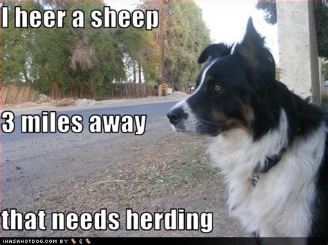 Border Collie Meme - speak of the devil a day in the life of a dog