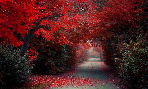 Path, Road, Trees, Red, Fall, Nature, Landscape, Selective