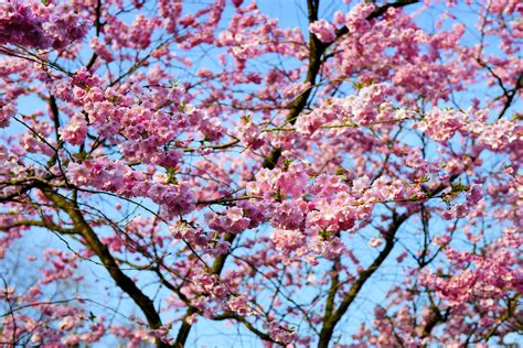 Free Images : tree branch flower bloom spring produce