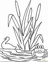Pond Coloring Worksheet Drawing Pages Preschool Worksheets Nature Frog Duck Animals Printable Education Simple Scene Preschoolers Kindergarten Easy Template Pre sketch template