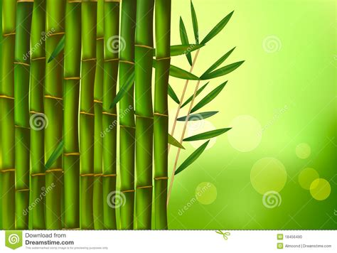 beautiful bamboo border vector stock photo image