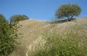 Kalk Für Rasen : kalkmagerrasen ~ Frokenaadalensverden.com Haus und Dekorationen
