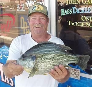 World Record Redear Sunfish - Bluegill - Big Bluegill