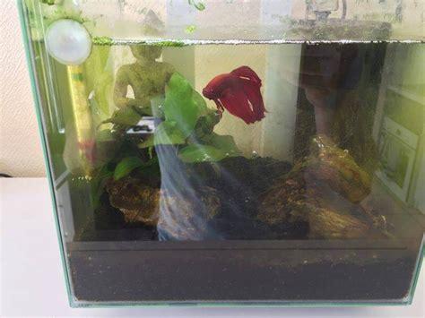 nettoyer le fond de l aquarium d 233 butant nettoyage 224 fond de mon nano 14l forum aquarium