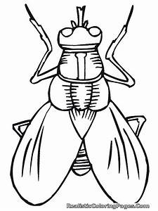 Realistic Insect Coloring Pages | Realistic Coloring Pages