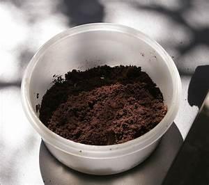 Kaffeesatz Als Dünger : kaffeesatz als d nger kaffeesatz mango pflanzen und ~ Watch28wear.com Haus und Dekorationen