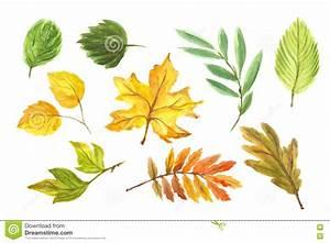 Autumn leaves set. stock illustration. Illustration of ...