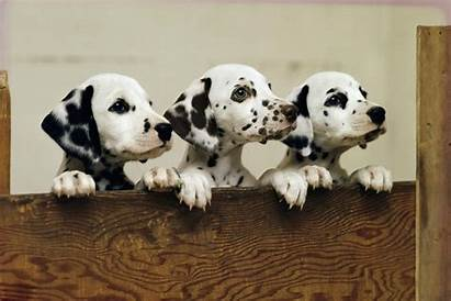Cute Puppy Dogs Dog Germs Animals Study