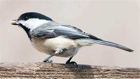 7 Birds You Will See In Toronto Over The Winter