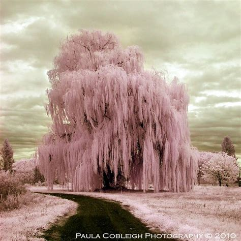 digital infrared photography  great ir shots design