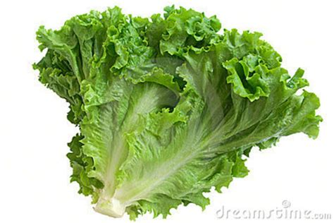 Lettuce Clipart Lettuce Clipart Clipground