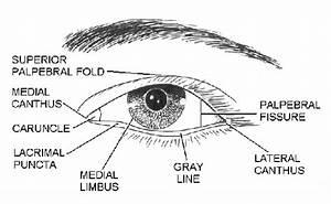 Disturbance On The Inside Of The Eyelid