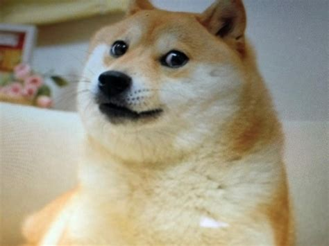 Dogecoin price: How the value of the cryptocurrency was ...